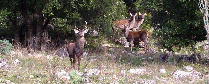 Cervo sardo, Sardegna escursioni